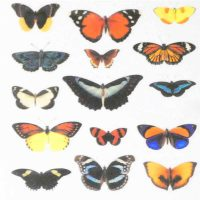 Butterfly Water Decal Design 1005