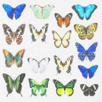 Butterfly Water Decal Design 1006