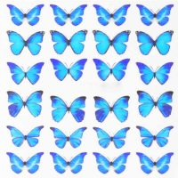 Butterfly Water Decal Design 1013