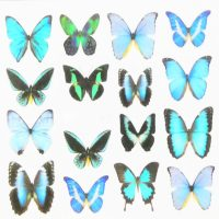 Butterfly Water Decal Design 1012